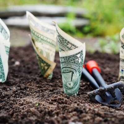 money planted in the soil