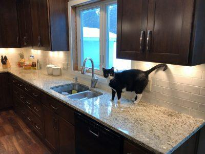 Cat on quartz kitchen countertop