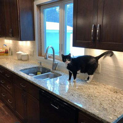 Cat on quartz kitchen countertop